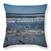 Sea Birds Feeding On Florida Coast Dsc00473_16 Throw Pillow
