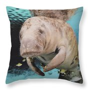 Sea Cow Swimming Underwater Throw Pillow