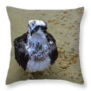 Sea Hawk Standing In Shallow Water Throw Pillow