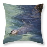 Sea Lion In Clear Blue Waters Throw Pillow
