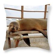 sea lion on a bench in Puerto Ayora, Santa Cruz Island, Galapagos Throw Pillow