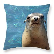 Sea Lion Or Seal Throw Pillow