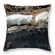 Sea Lions At Sea Lion Cove State Marine Conservation Area Throw Pillow