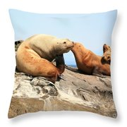 Sea Lions Throw Pillow by Chris Dutton