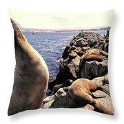 Sea Lions On Rock Pier Throw Pillow