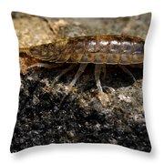 Isopod Throw Pillow by April Wietrecki Green