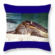 Sea Turtle Resting Throw Pillow