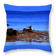 Seagul Landing Throw Pillow