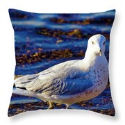 Seagull 1 Throw Pillow