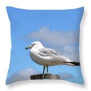 Seagull Beach Art - Sitting Pretty - Sharon Cummings Throw Pillow