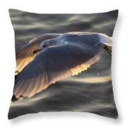 Seagull Flight Throw Pillow by Dustin K Ryan