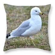 Seagull In Field Throw Pillow