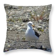 Seagull In Patagonia Throw Pillow