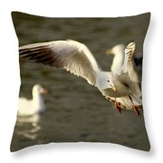 Seagull Manoeuvers Throw Pillow