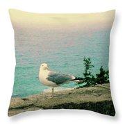 Seagull On Stone Wall Throw Pillow