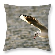 Seagull Over Water Throw Pillow
