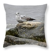 Seagull Sitting On Jetty Throw Pillow