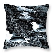 Seagull Trio Throw Pillow