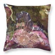 Seahorse1 Throw Pillow