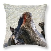 Seal Fight Throw Pillow