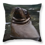 Seal In The Water Throw Pillow