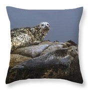 Seal Of Lover's Point Beach Throw Pillow by Atul Daimari