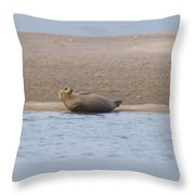 Seal Relaxing On Cupsogue Beach Throw Pillow