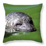 Seal Swimming Portrait Wildlife Scene Throw Pillow