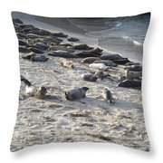 Seals, Seals, And More Seals Throw Pillow