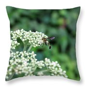 Search Throw Pillow