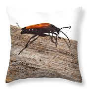 Searching For Food Throw Pillow