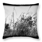 Searching For Mr. Bob Throw Pillow