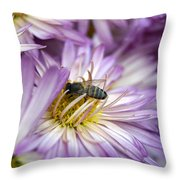 Searching Honey Throw Pillow