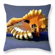 Seashell Cymatium Lotoium Throw Pillow