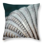 Seashell Designs Throw Pillow
