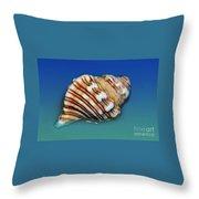 Seashell Wall Art 1 Throw Pillow