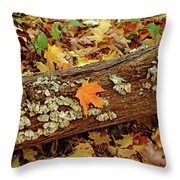 Seashells In The Forest Throw Pillow