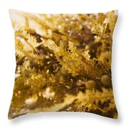 Seaweed In The Sand Throw Pillow