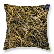 Seaweed On The Coast Of Iceland Throw Pillow