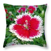 Sedona Dianthus Throw Pillow