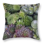 Sedum Plants Used As Green Roof Throw Pillow
