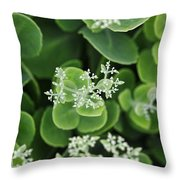 Sedum Pre-bloom Throw Pillow