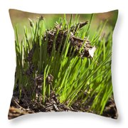 Seedlings Throw Pillow