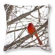Seeing Red - Northern Cardinal - Cardinalis Cardinalis Throw Pillow