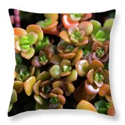 Seeing Succulents Throw Pillow