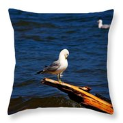 Self Cleaning Throw Pillow by Amanda Struz