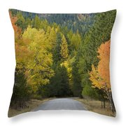 Selkirk Color Throw Pillow