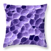 Sem Of Feather Quill Interior Throw Pillow