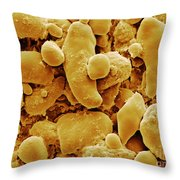 Sem Of Starch Granules Throw Pillow