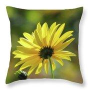 September Sunny Daisy Throw Pillow